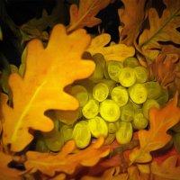 Осенняя обнова винограда.... :: Tatiana Markova