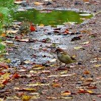 Осень дождями ляжет... :: Светлана
