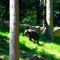 Медведь и девушка-фотограф :: Nina Yudicheva