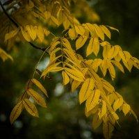 Осень... :: Nonna