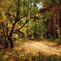И от осени не спрятаться...не скрыться... :: Лесо-Вед (Баранов)