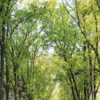 Осень в октябре :: Ирина Ивановна
