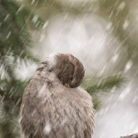 Воробей и первый снег :: Андрей Поляков