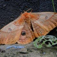 Ночная бабочка :: Николай Сапегин