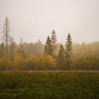 Туманное утро :: Алексей Строганов