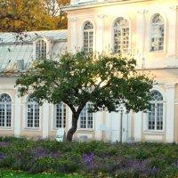 Большая оранжеря и дерево :: Владимир Гилясев