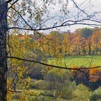Шумели листья, облетая... :: Елена Чижова