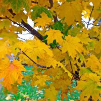 Осень. :: Ilya Goidin
