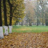 Осенний парк. :: Светлана Исаева