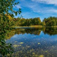 Осень на лесном озере :: Андрей Дворников