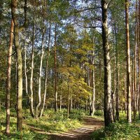 Осенний лес :: Лидия (naum.lidiya)
