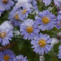 цвет и снег :: Alexandr Staroverov
