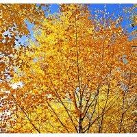 Расплескала осень краски золотые.. :: Любовь Чунарёва