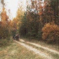 В осеннем лесу :: Марина