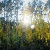 Солнце сквозь ветви деревьев. :: Valentina