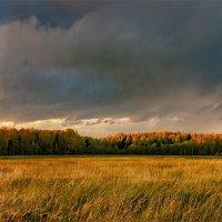 Я так люблю осенний лес - над ним сияние небес... © :: Александр Никитинский