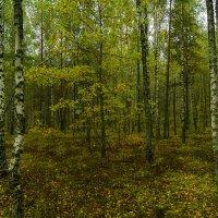 Прогулка по лесу :: Игорь Сикорский