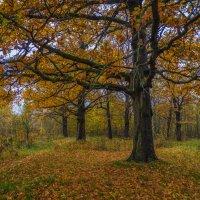 Дубовая роща, осень :: Андрей Дворников