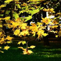 Осень. :: Paparazzi
