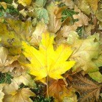 Осенний желтый лист :: Татьяна Королёва