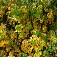 Осенние листья :: Natalia Harries