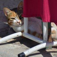 кошки Туниса :: Евгений Фролов