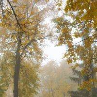 Утренний туман в осеннем парке :: Сергей Тагиров