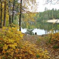 Осень в моем городе :: Лидия (naum.lidiya)