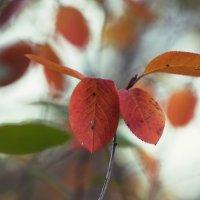 Оранжевые листья :: Aнна Зарубина