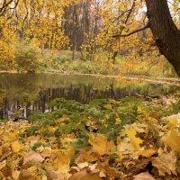 Осень золотая :: Константин Тимченко
