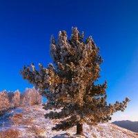 На горы зимние, взор Ваш, пусть неутомимым будет 7 :: Сергей Жуков