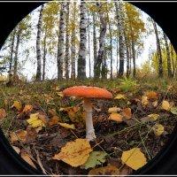 Осень. :: Борис Гуревич
