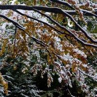 Первый снег в октябре :: Александр Крупский