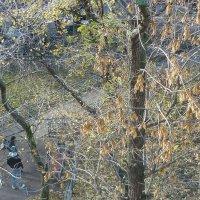Листьев нет-открылся дворик под моим окном... :: Татьяна Юрасова