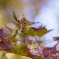 Осенние листья :: Дима Пискунов
