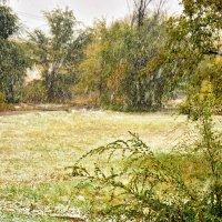 Первый снег! :: Юрий Фёдоров