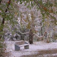 Первый снег---02 :: Владимир Холодный