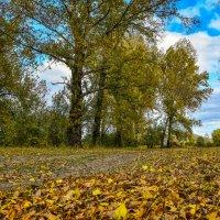 Осень :: юрий Амосов