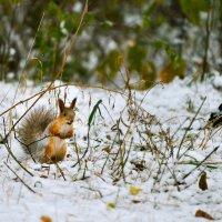 Нычку потеряла под снегом :: cfysx