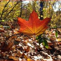 Все краски октября :: Андрей Заломленков