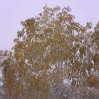 Первый снег---03 :: Владимир Холодный