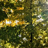 Осеннее солнце :: Константин Косов