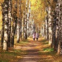 Прогулки в осени :: Татьяна Ломтева