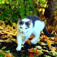 Осенний котэ :: Андрей Заломленков