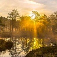 Купаясь в золоте солнца. :: Фёдор. Лашков