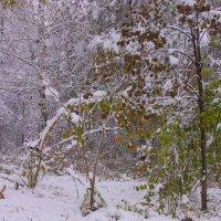 Первый снег---05 :: Владимир Холодный