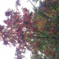 Осень :: Мария Владимирова