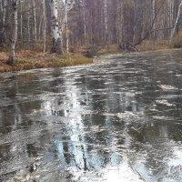 Первый тонкий лед на озере. :: Наталья Тимофеева
