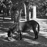 Разве, разве я не лошадь? :: Наталья