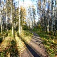 Осень,как она есть :: Taisia_ZX